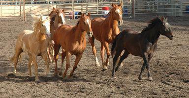 Giochi di cavalli online per bambini