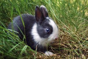Come disegnare un coniglio Online