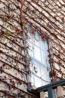 Come a inquadrare un muro e mettere in nuove finestre?