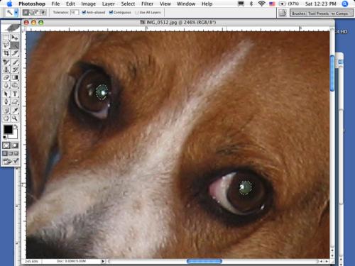 Come usare Photoshop per Mac