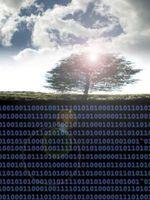 Come copiare il testo della cella da DataGridView in Excel